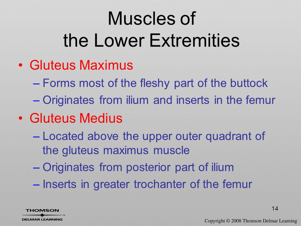 14 Gluteus Maximus –Forms most of the fleshy part of the buttock –Originates from ilium and inserts in the femur Gluteus Medius –Located above the upper outer quadrant of the gluteus maximus muscle –Originates from posterior part of ilium –Inserts in greater trochanter of the femur Muscles of the Lower Extremities