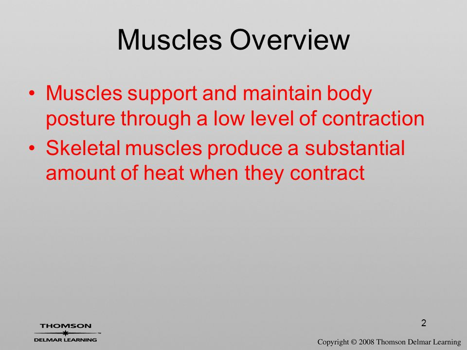 2 Muscles Overview Muscles support and maintain body posture through a low level of contraction Skeletal muscles produce a substantial amount of heat when they contract