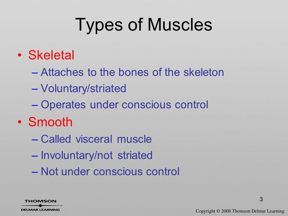 3 Skeletal –Attaches to the bones of the skeleton –Voluntary/striated –Operates under conscious control Smooth –Called visceral muscle –Involuntary/not striated –Not under conscious control Types of Muscles