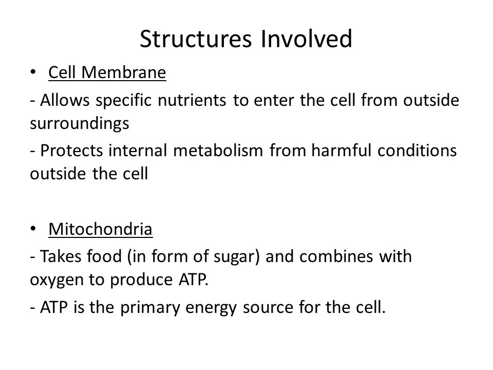 Structures Involved Cell Membrane - Allows specific nutrients to enter the cell from outside surroundings - Protects internal metabolism from harmful conditions outside the cell Mitochondria - Takes food (in form of sugar) and combines with oxygen to produce ATP.