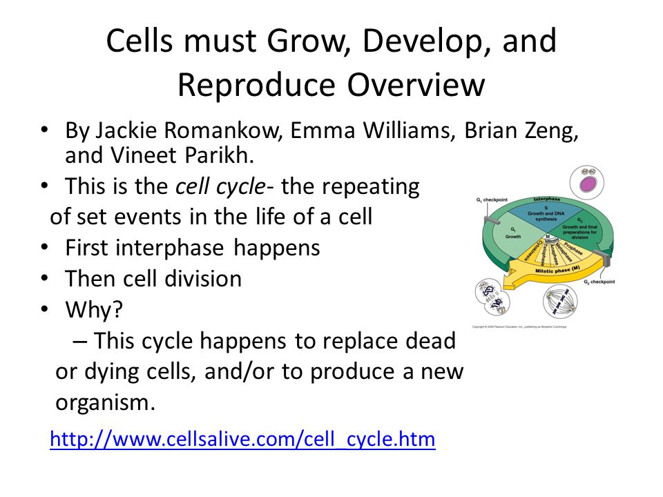 Cells must Grow, Develop, and Reproduce Overview By Jackie Romankow, Emma Williams, Brian Zeng, and Vineet Parikh.