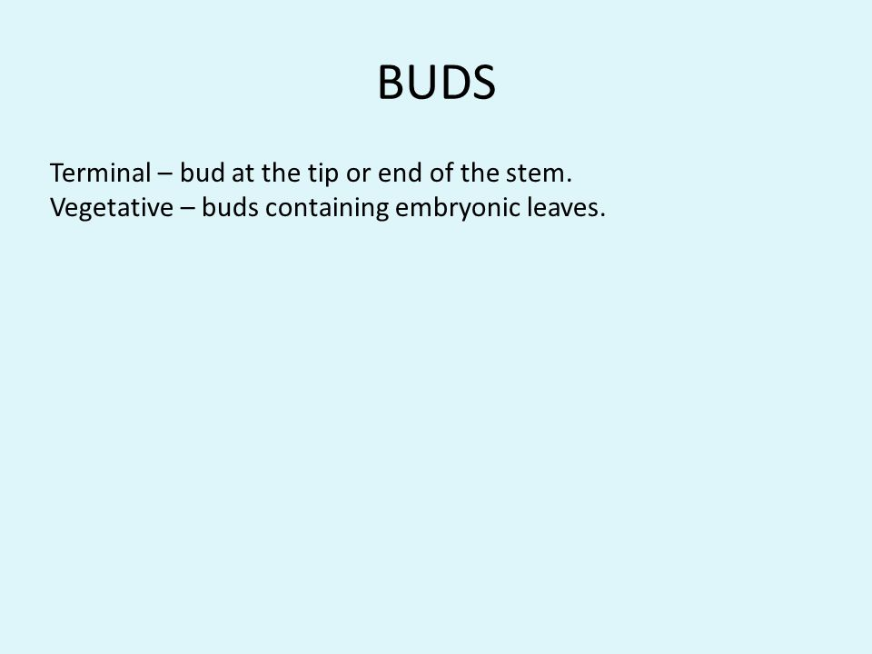 BUDS Terminal – bud at the tip or end of the stem. Vegetative – buds containing embryonic leaves.
