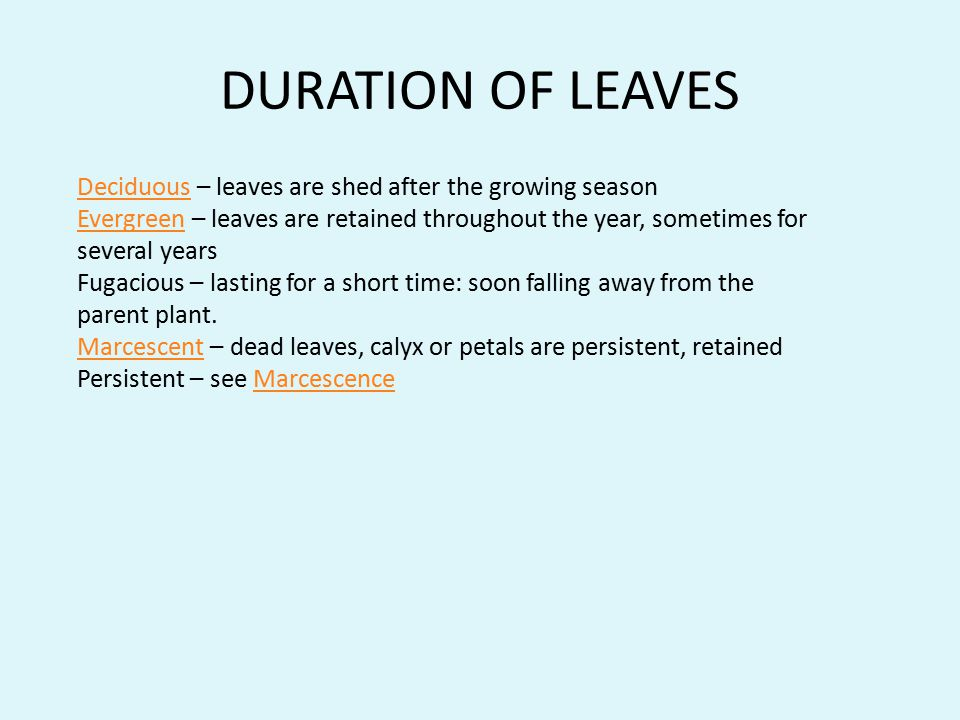 DURATION OF LEAVES DeciduousDeciduous – leaves are shed after the growing season EvergreenEvergreen – leaves are retained throughout the year, sometim
