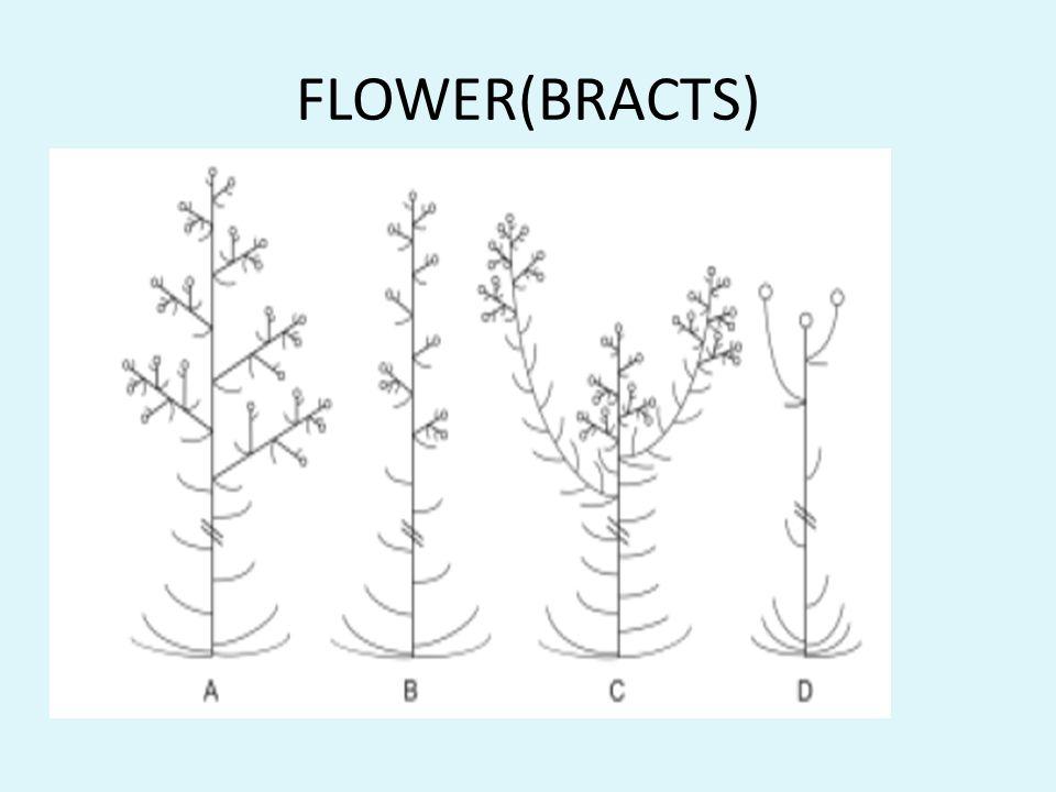 FLOWER(BRACTS)