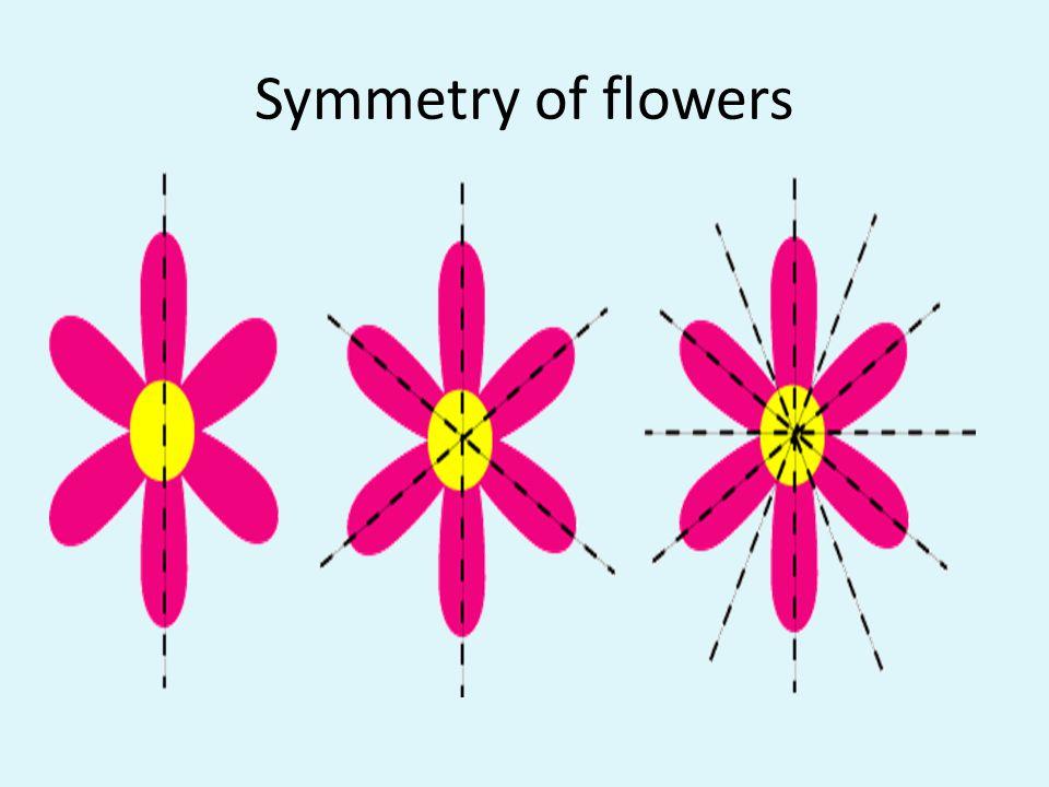 Symmetry of flowers