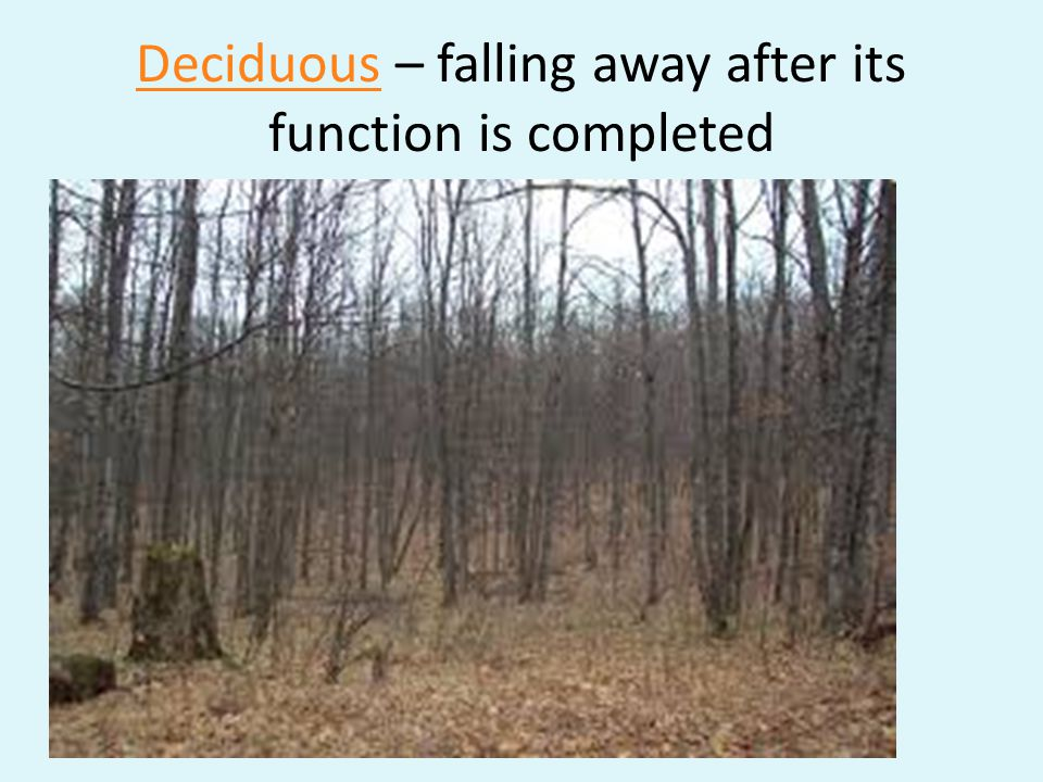 DeciduousDeciduous – falling away after its function is completed