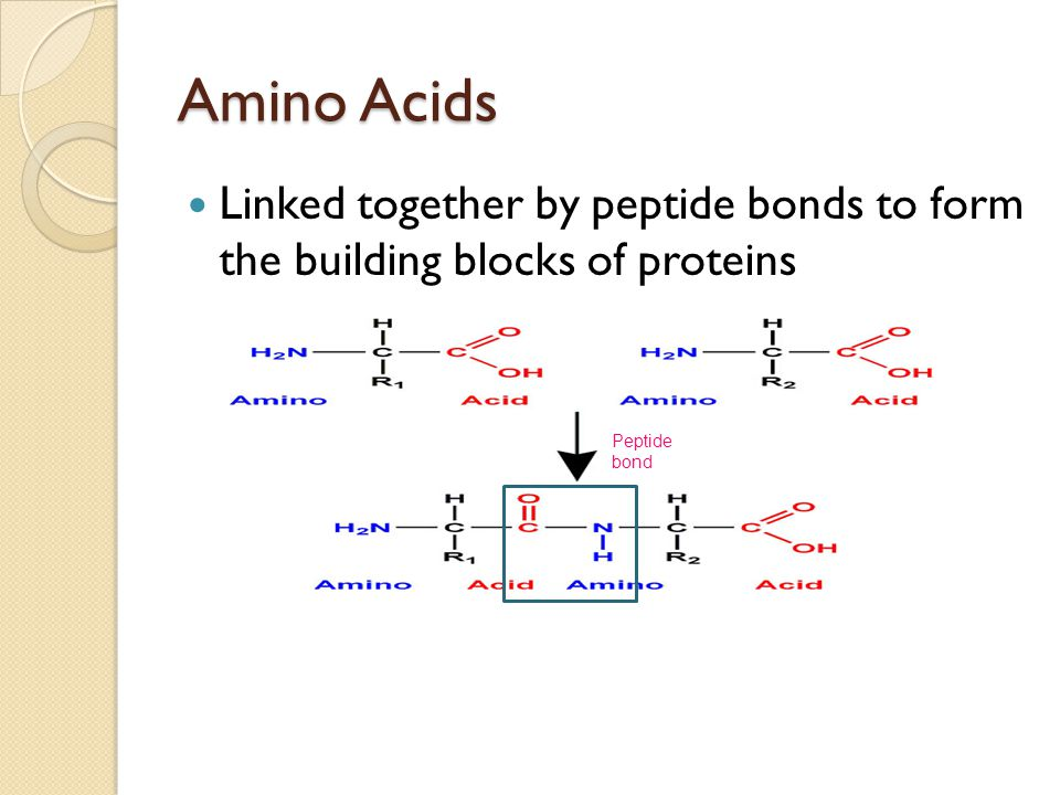 Functions of Proteins ProteinFunctionExamples EnzymesCatalyse chemical reactionsTransminases, phosphatases, dehydrogenases HormonesChemical messengers that control the actions of specific cells or organs Insulin, growth hormone, cortisol Transport ProteinsTransport ions, small molecules or macromolecules across biological membranes Hemoglobin, albumin, transferrin ImmunoglobulinsMediate humoral immune response to id and neutralize foreign objects IgG, IgM, IgA StructuralStructures of cells and tissues Collagen, elastin, keratin