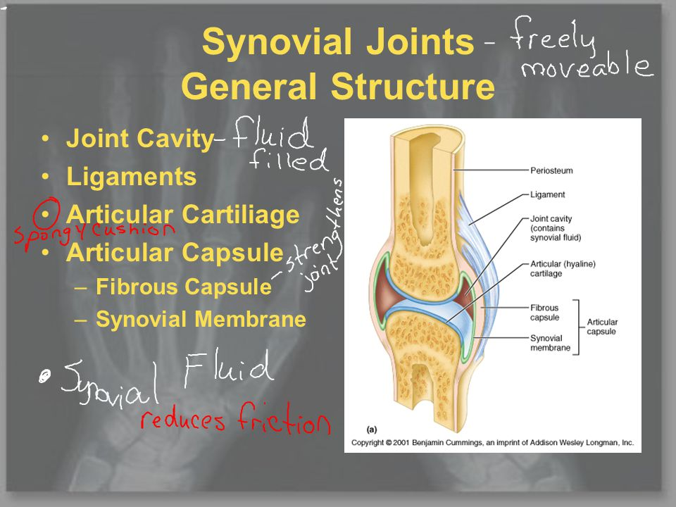 Synovial Joints 6 types