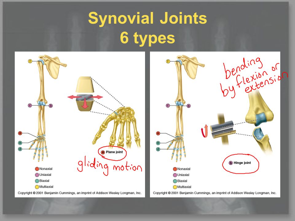 Synovial Joints 6 types (cont.)