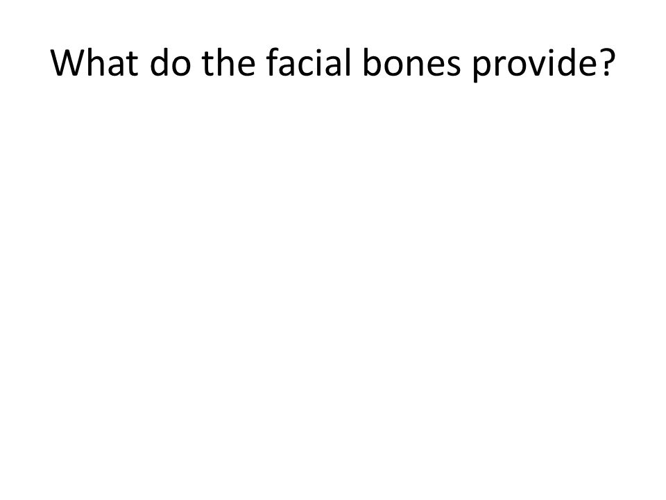 What do the facial bones provide