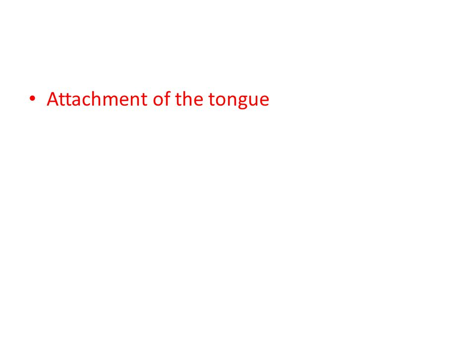 Attachment of the tongue
