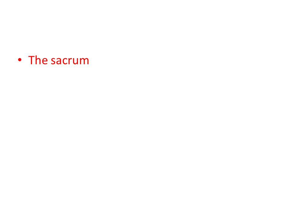 The sacrum
