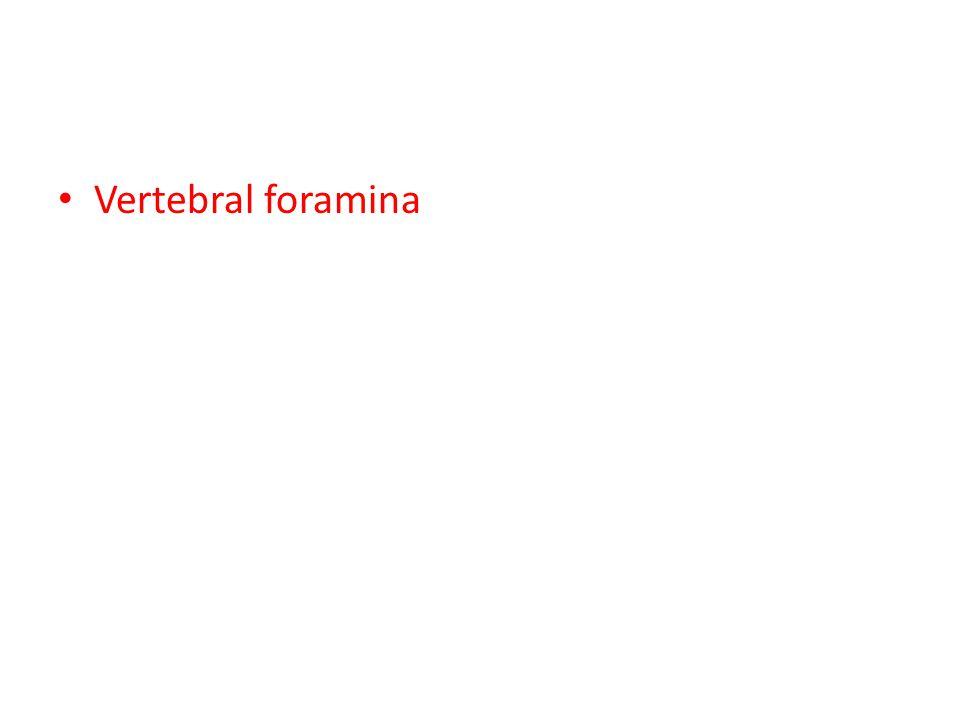 Vertebral foramina