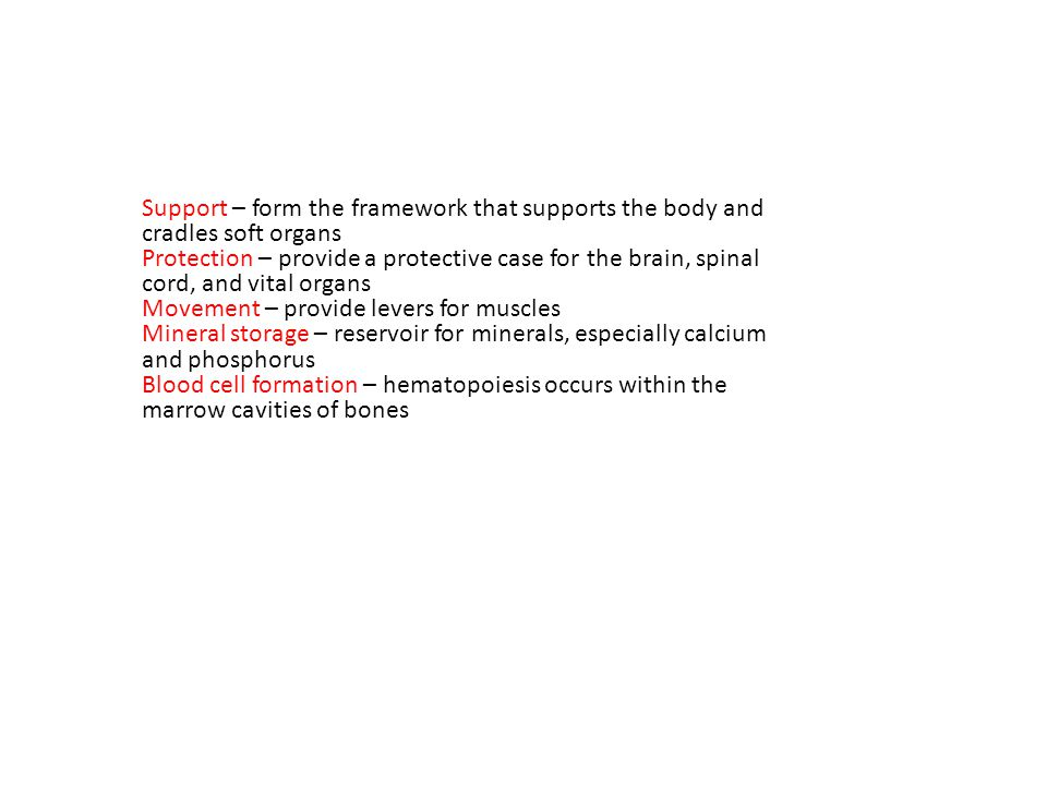 Support – form the framework that supports the body and cradles soft organs Protection – provide a protective case for the brain, spinal cord, and vital organs Movement – provide levers for muscles Mineral storage – reservoir for minerals, especially calcium and phosphorus Blood cell formation – hematopoiesis occurs within the marrow cavities of bones