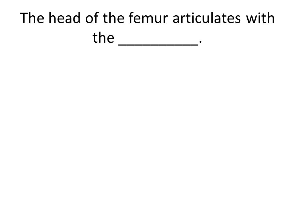 The head of the femur articulates with the __________.
