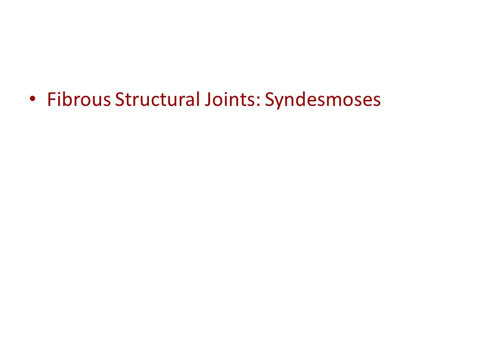 Fibrous Structural Joints: Syndesmoses