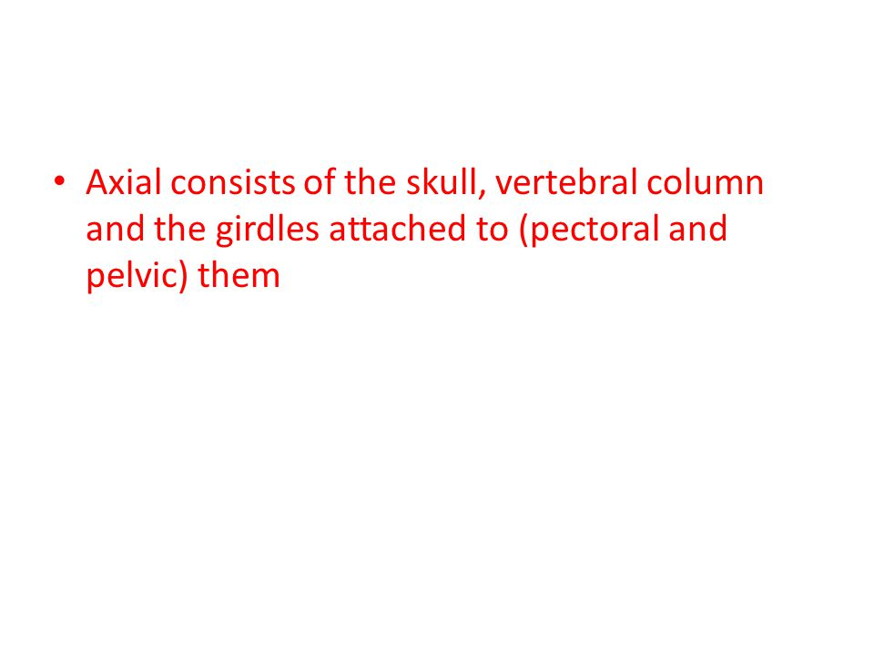 Axial consists of the skull, vertebral column and the girdles attached to (pectoral and pelvic) them