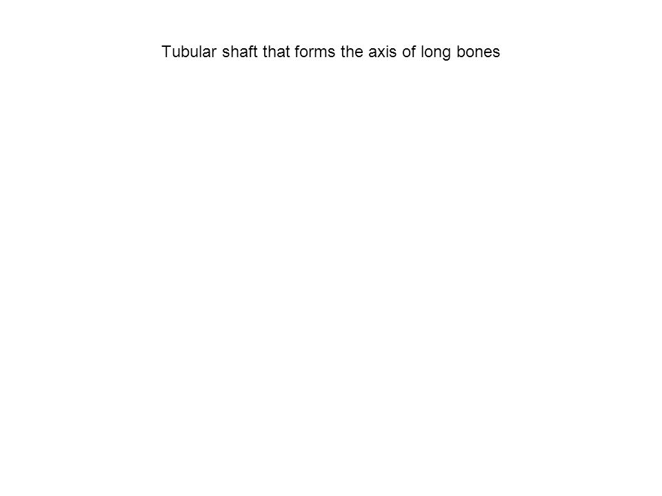 Tubular shaft that forms the axis of long bones