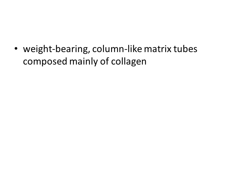 weight-bearing, column-like matrix tubes composed mainly of collagen