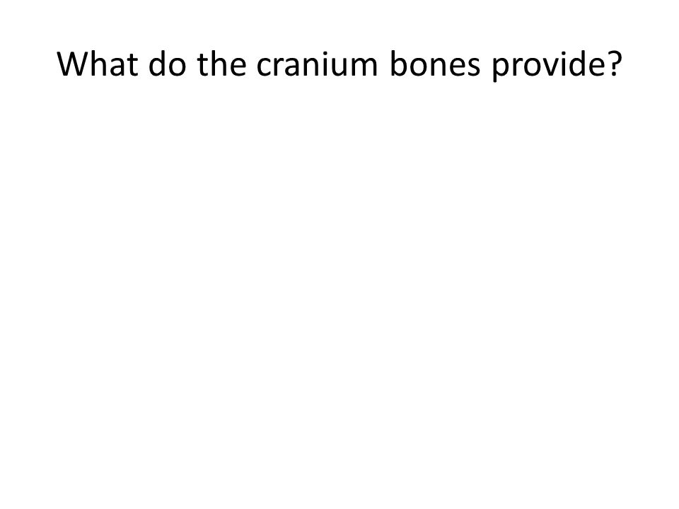 What do the cranium bones provide