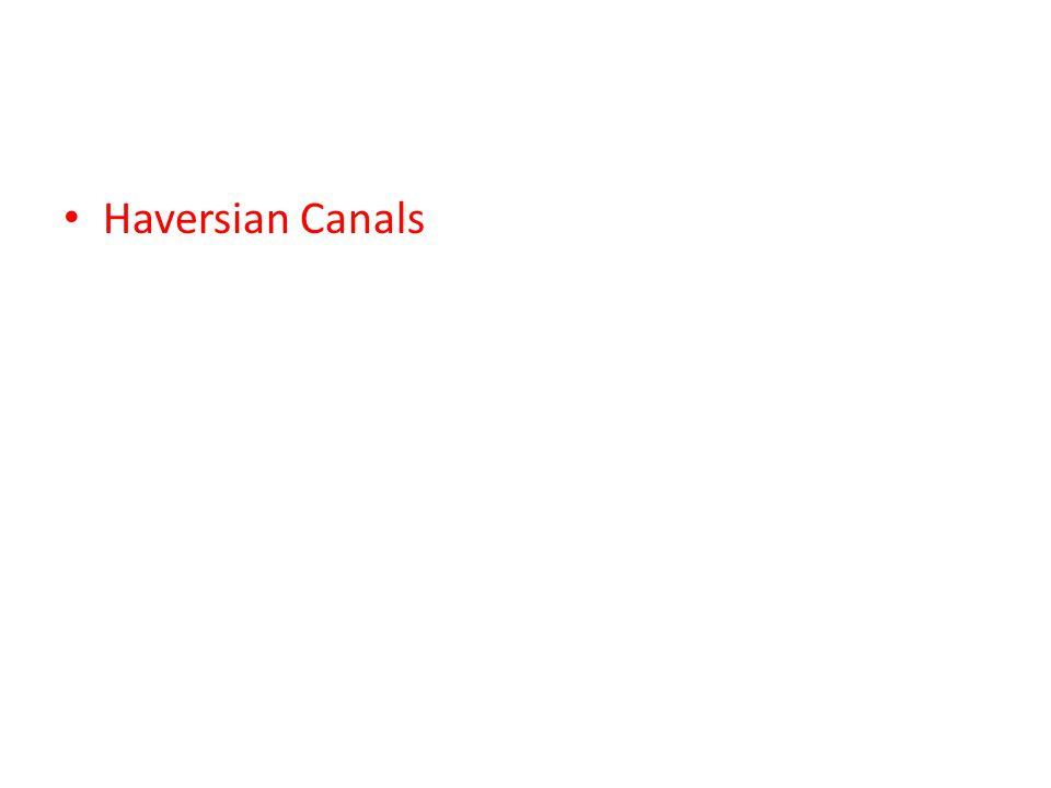 Haversian Canals