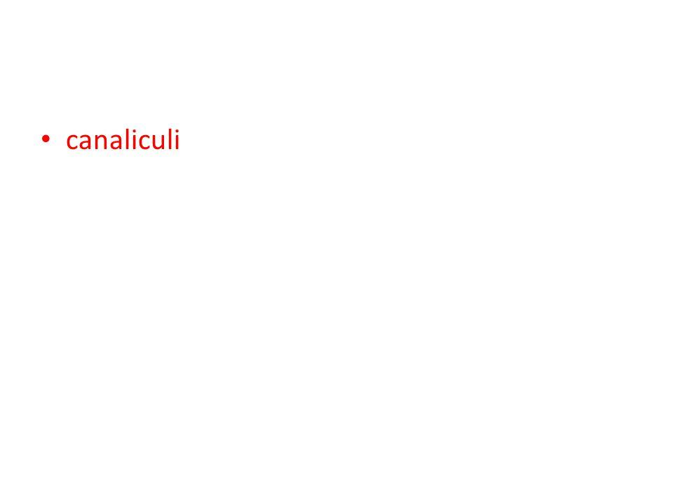 canaliculi