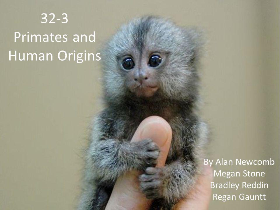 32-3 Primates and Human Origins By Alan Newcomb Megan Stone Bradley Reddin Regan Gauntt
