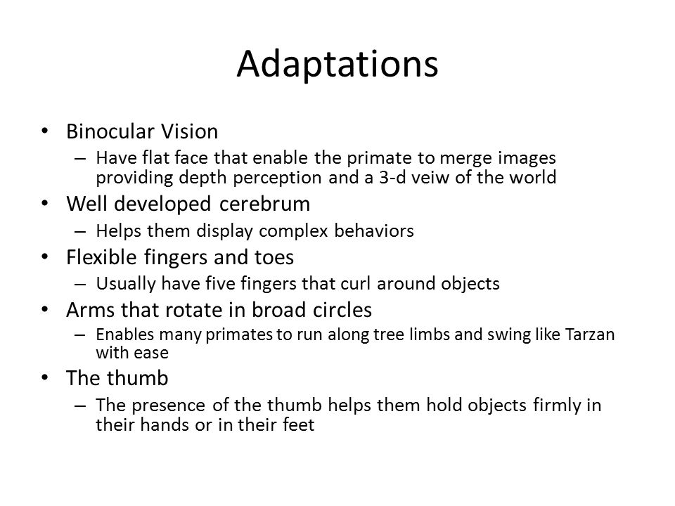 Adaptations Binocular Vision – Have flat face that enable the primate to merge images providing depth perception and a 3-d veiw of the world Well deve