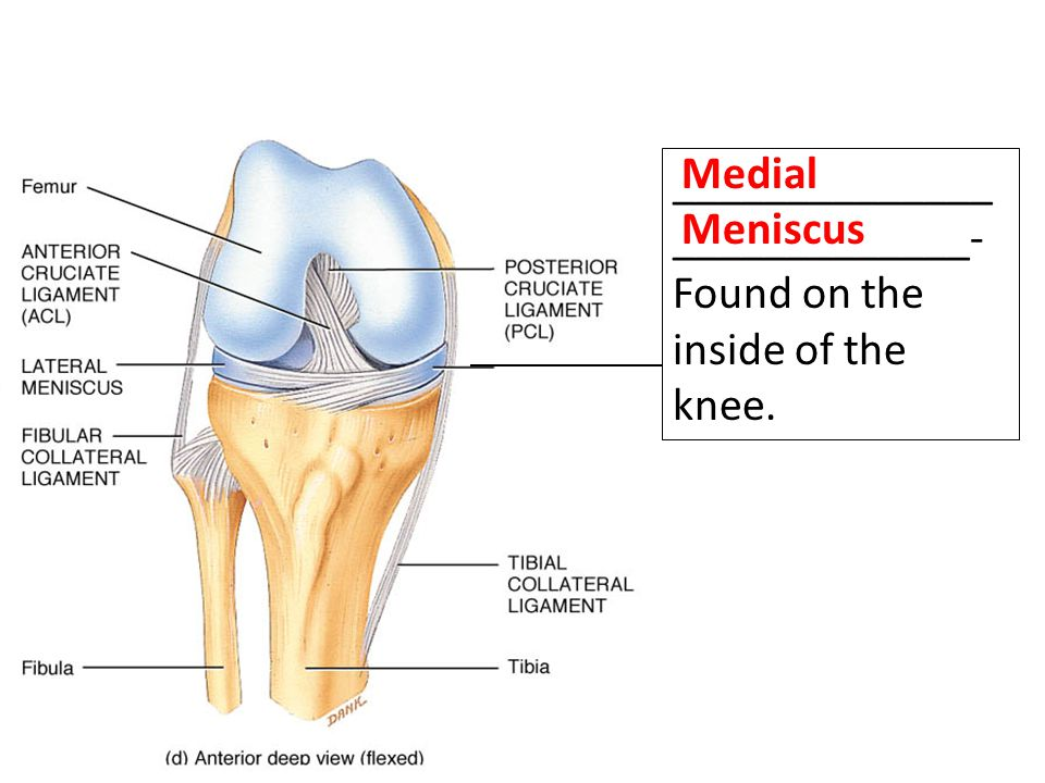 ______________ _____________- Found on the inside of the knee. Medial Meniscus