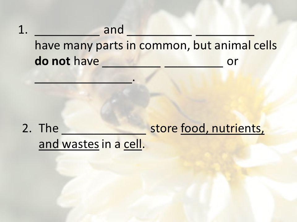 1.__________ and __________ _________ have many parts in common, but animal cells do not have _________ _________ or _______________. 2.The __________