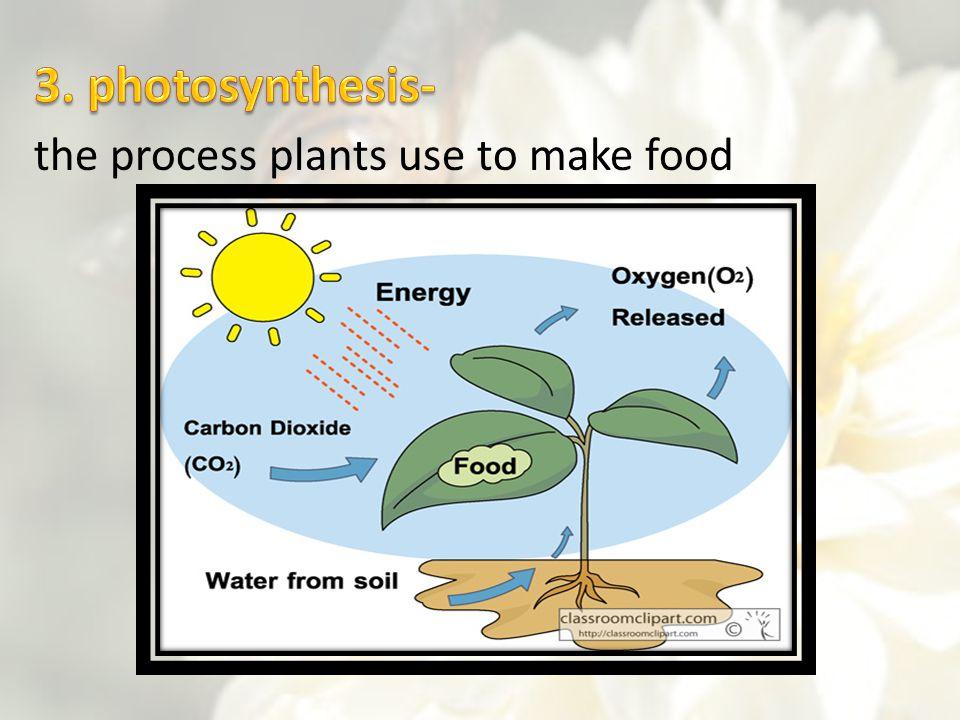 the process plants use to make food