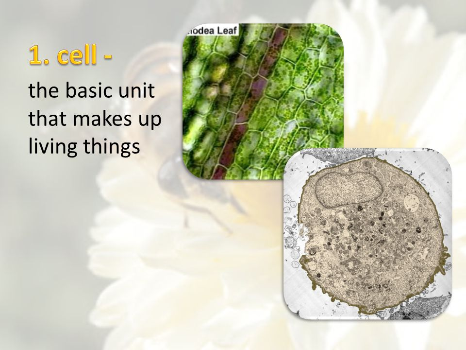 the basic unit that makes up living things