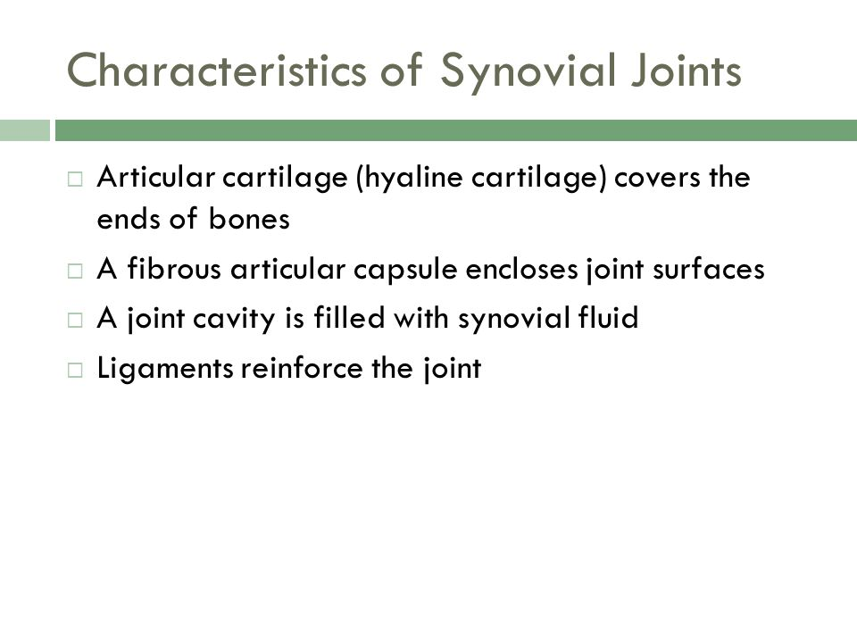 Characteristics of Synovial Joints  Articular cartilage (hyaline cartilage) covers the ends of bones  A fibrous articular capsule encloses joint sur