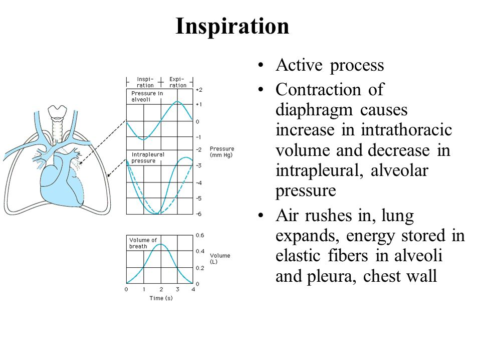Inspiration Active process Contraction of diaphragm causes increase in intrathoracic volume and decrease in intrapleural, alveolar pressure Air rushes in, lung expands, energy stored in elastic fibers in alveoli and pleura, chest wall