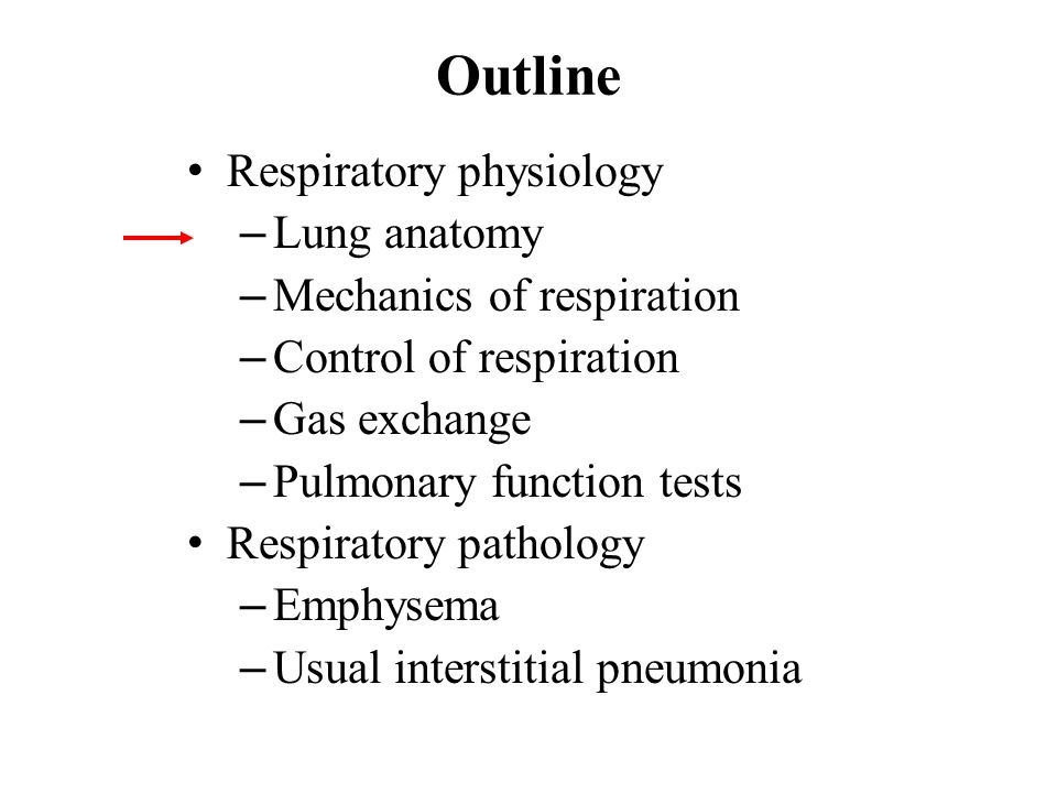 Respiratory System Central nervous system (medulla) Peripheral nervous system (phrenic nerve) Skeletal muscle (diaphragm, intercostals) Chest wall (ribs) Lung Conducting region (airways) Respiratory region (alveoli) Pulmonary vasculature Heart