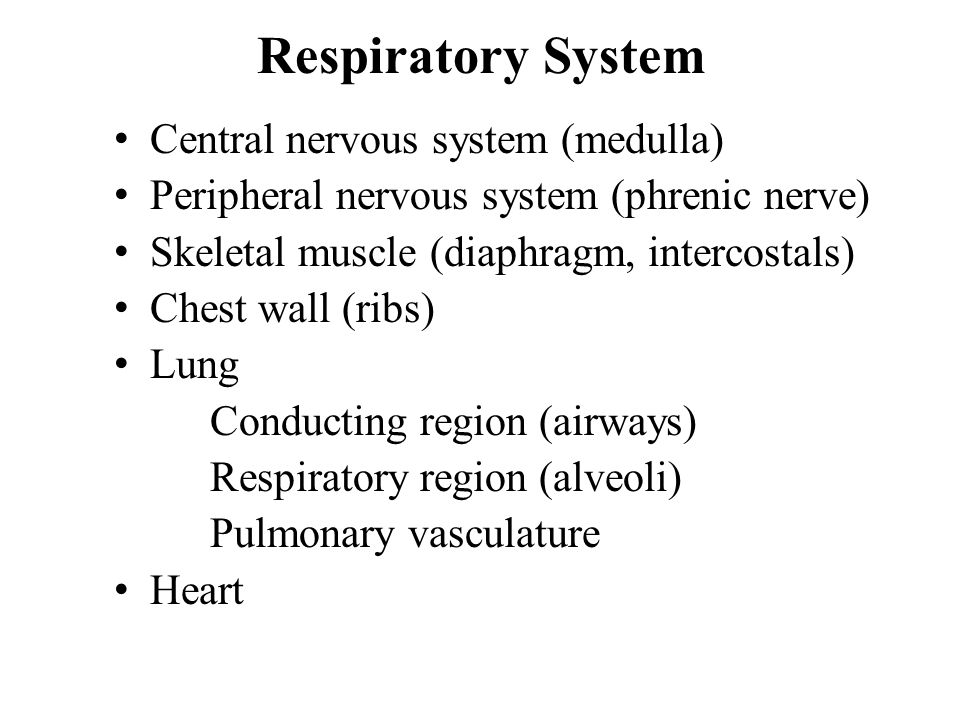 Pulmonary Pathologies Asthma (airways, inflammatory) Diffuse alveolar damage (alveoli) Pneumonia (infection, inflammatory) Lung cancer (malignancy) [Chronic obstructive pulmonary disease] [Usual interstitial pneumonia]