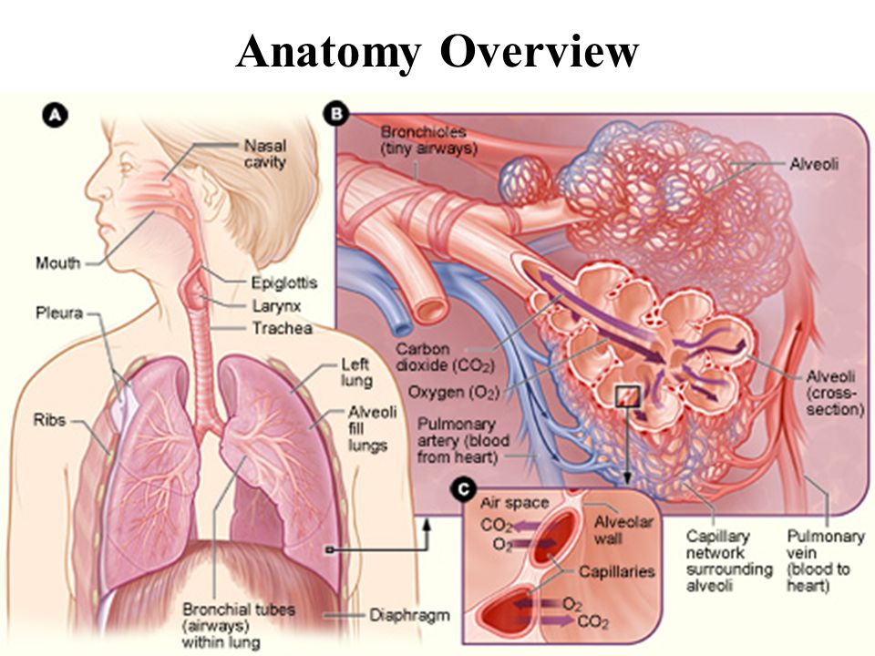 Chronic Obstructive Pulmonary Disease (COPD) Diseases that cause airflow obstruction primarily during expiration Patients with COPD often show overlapping features of these specific disease entities: Emphysema Chronic bronchitis Bronchiectasis Asthma Small airways disease Reduced FEV 1