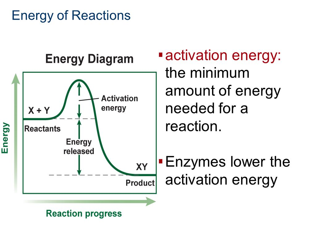 Chemistry in Biology  activation energy: the minimum amount of energy needed for a reaction.  Enzymes lower the activation energy Energy of Reaction