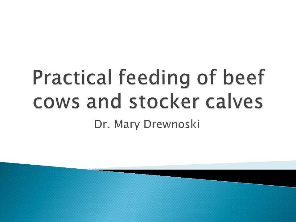 Dr. Mary Drewnoski