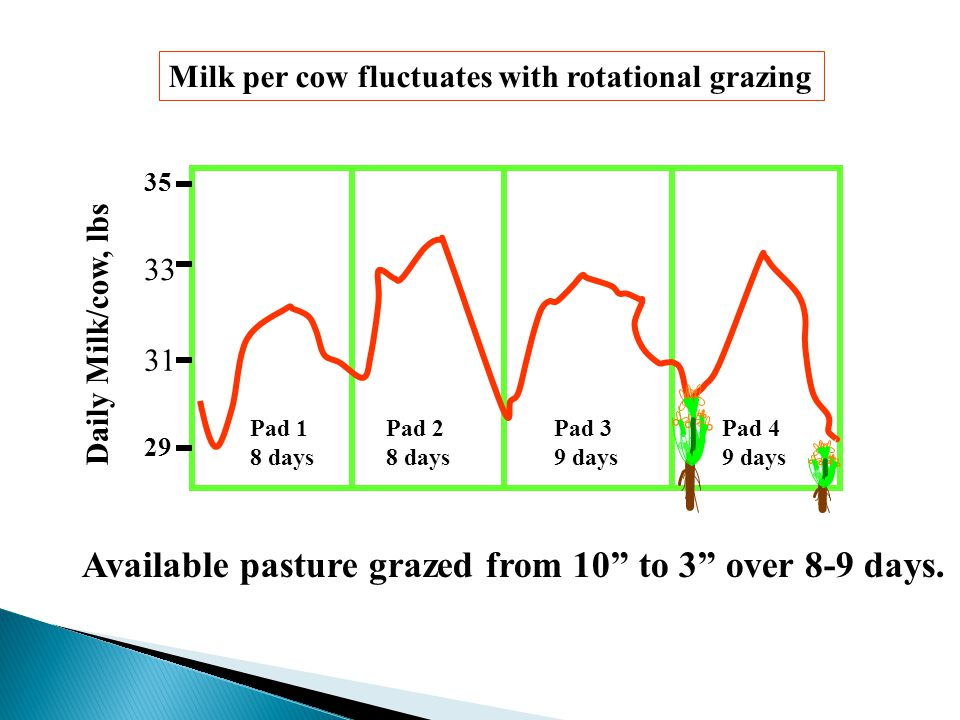 Daily Milk/cow, lbs Milk per cow fluctuates with rotational grazing Available pasture grazed from 10 to 3 over 8-9 days.