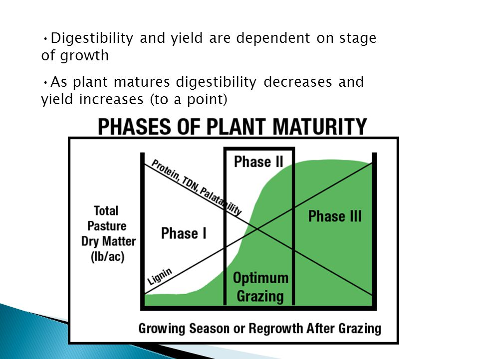 Digestibility and yield are dependent on stage of growth As plant matures digestibility decreases and yield increases (to a point)