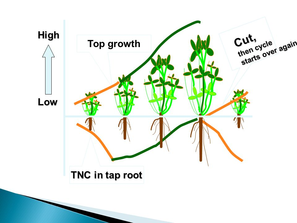 TNC in tap root Top growth High Low Cut, then cycle starts over again