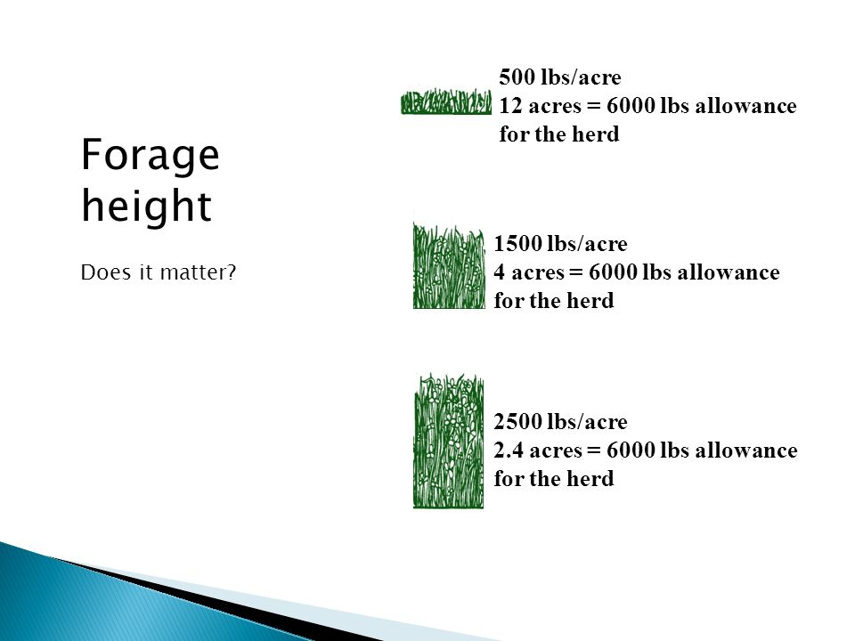 500 lbs/acre 12 acres = 6000 lbs allowance for the herd 1500 lbs/acre 4 acres = 6000 lbs allowance for the herd 2500 lbs/acre 2.4 acres = 6000 lbs allowance for the herd Forage height Does it matter