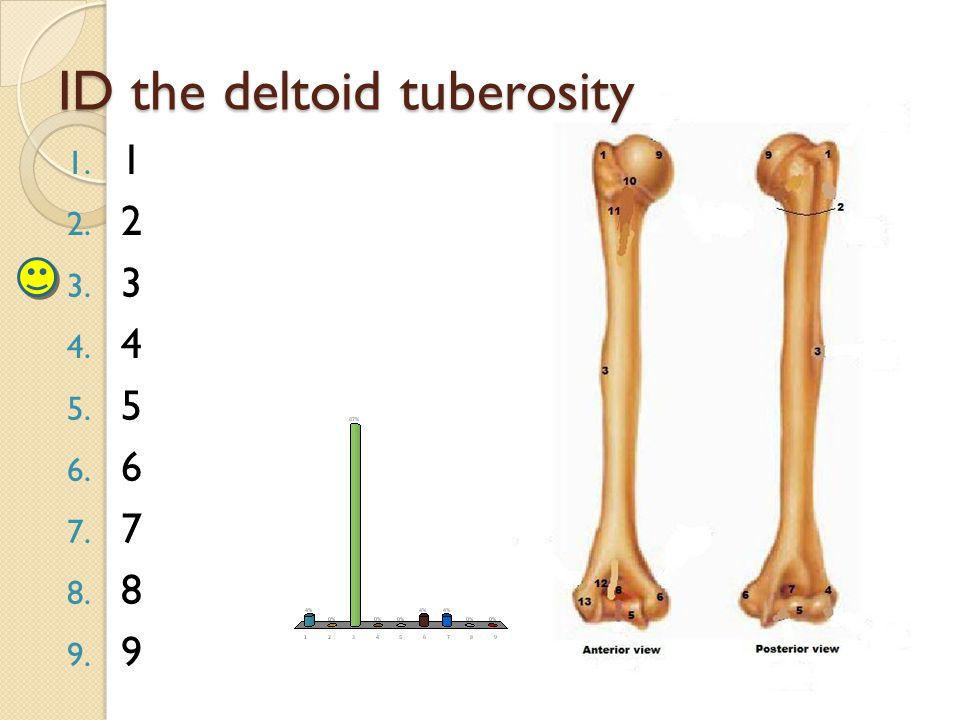 ID the deltoid tuberosity 1. 1 2. 2 3. 3 4. 4 5. 5 6. 6 7. 7 8. 8 9. 9