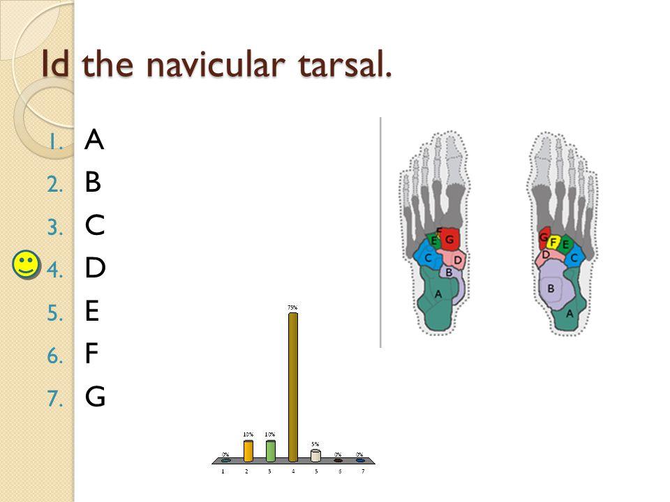 Id the navicular tarsal. 1. A 2. B 3. C 4. D 5. E 6. F 7. G