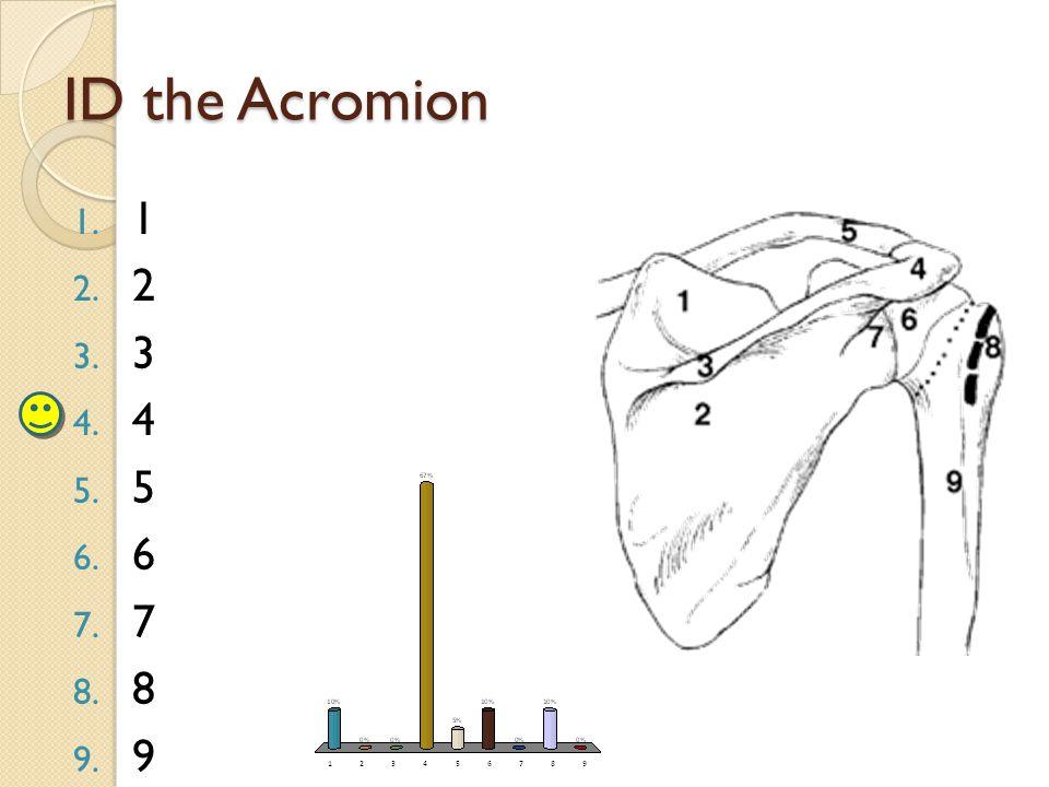 ID the Acromion 1. 1 2. 2 3. 3 4. 4 5. 5 6. 6 7. 7 8. 8 9. 9