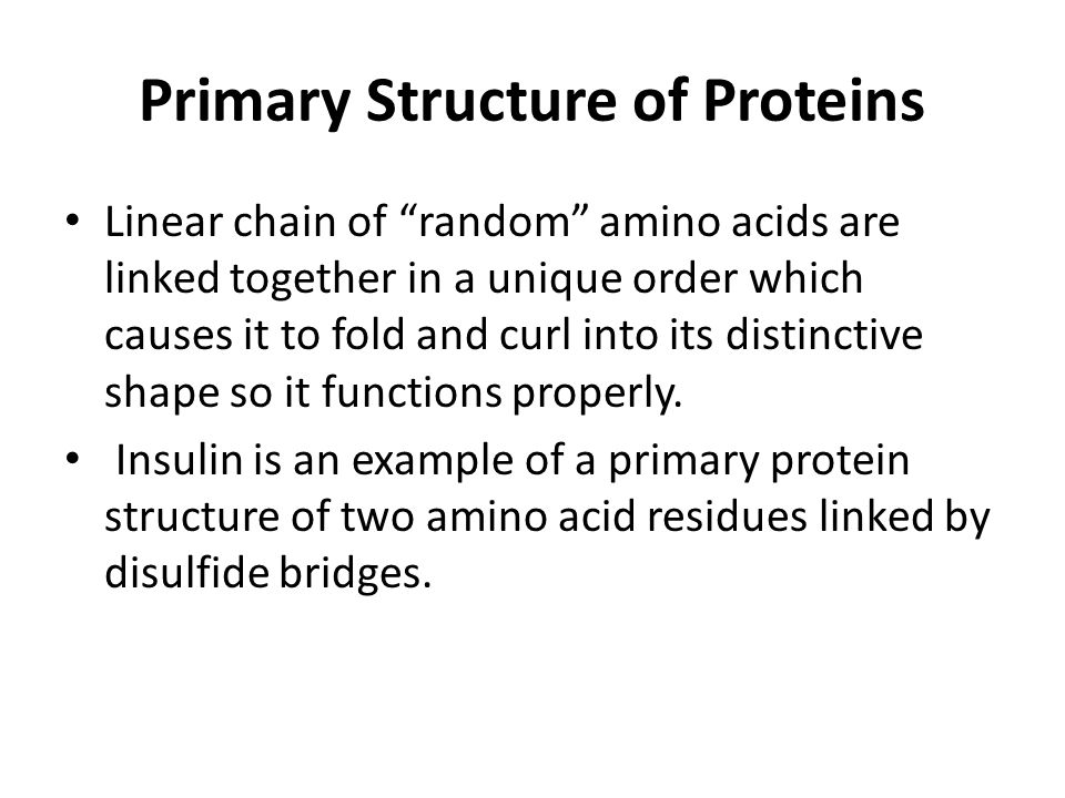 Primary Structure of Proteins Linear chain of random amino acids are linked together in a unique order which causes it to fold and curl into its distinctive shape so it functions properly.