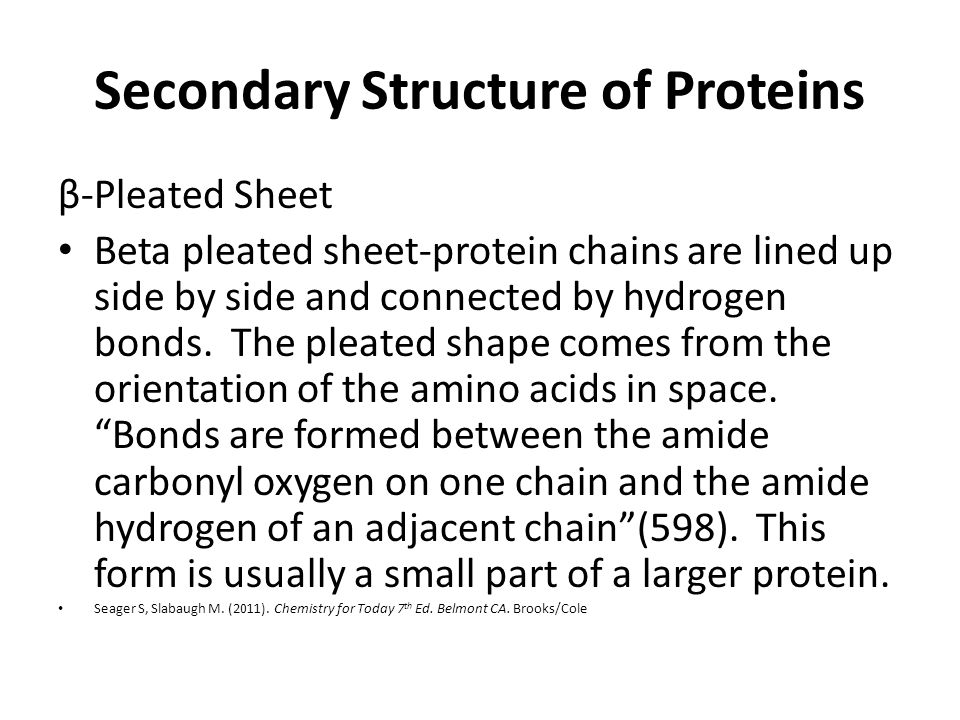 Secondary Structure of Proteins β-Pleated Sheet Beta pleated sheet-protein chains are lined up side by side and connected by hydrogen bonds.