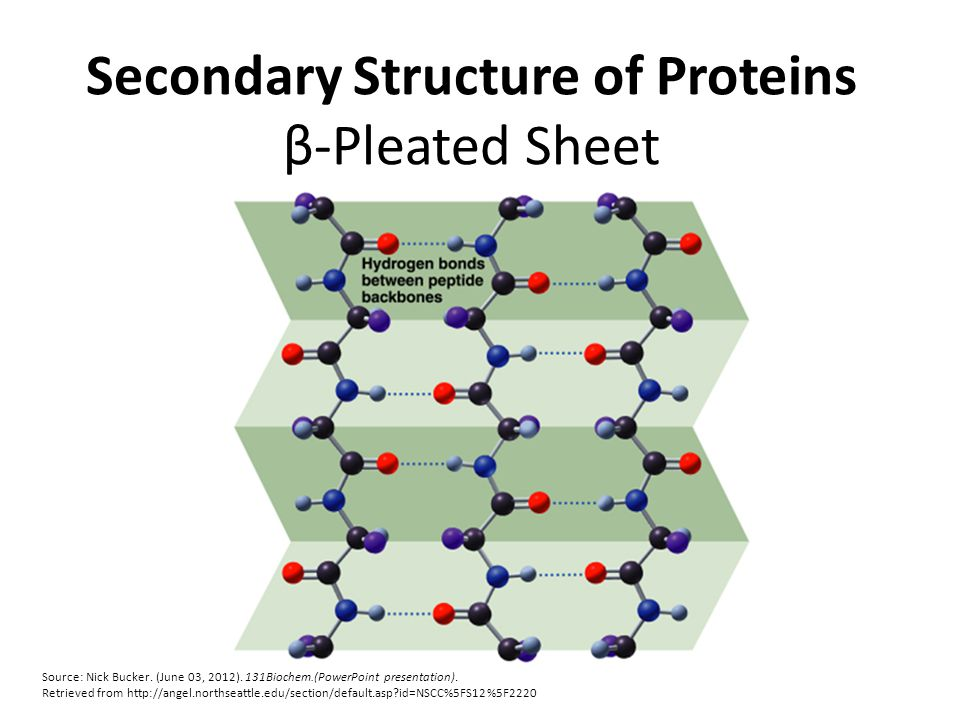 Secondary Structure of Proteins β-Pleated Sheet Source: Nick Bucker.