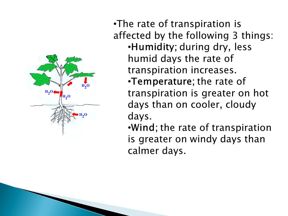The rate of transpiration is affected by the following 3 things: Humidity; during dry, less humid days the rate of transpiration increases.